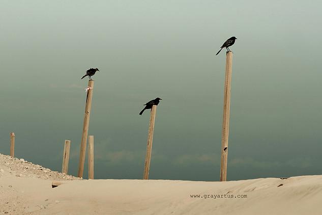 Watchers - Gray Artus photography