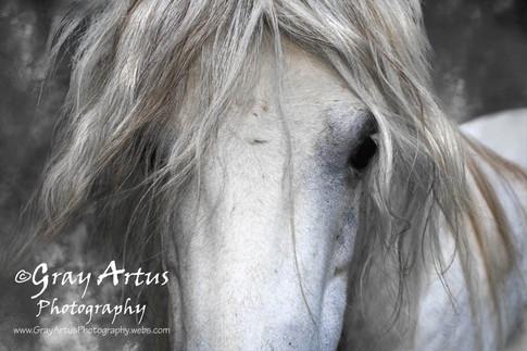 Horse Named Beautiful - Gray Artus