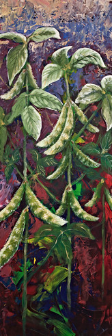 Soybeans - Gray Artus