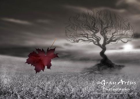 Last Leaf of Fall - Gray Artus