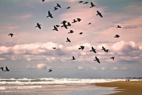 Birds in Flight - Gray Artus