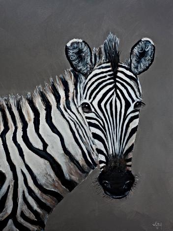 Zebra - Gray Artus
