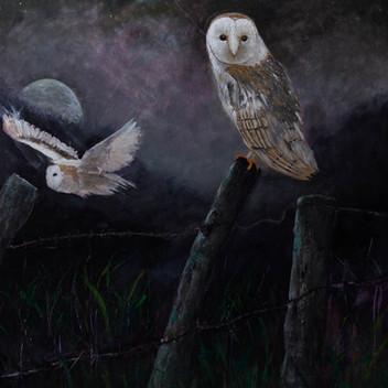 Barn Owls - Gray Artus