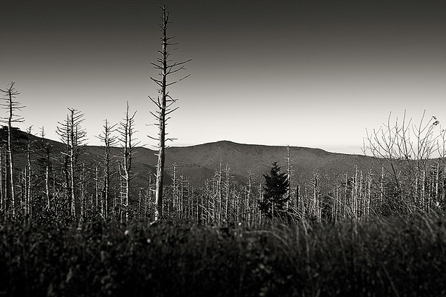 Mt Mitchell - Gray Artus