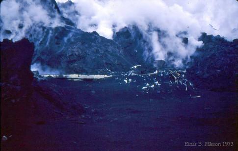 15. febrúar 1973. Rústir þurrkhússins, mávar