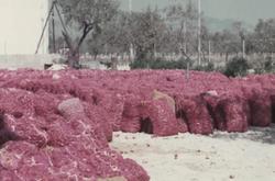 Tap de Cortí secando polígono