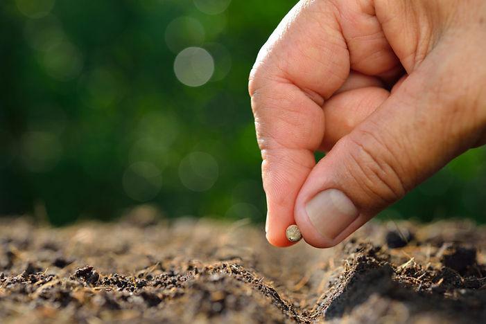 Plante a sua semente.
