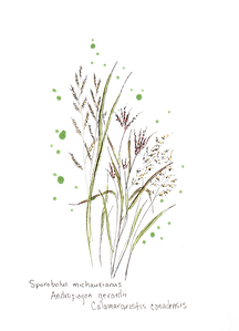 WetlandGrasses copy copy.png