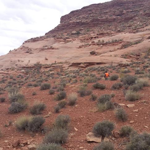 Immense sandstone mesas in Oljeto, UT.