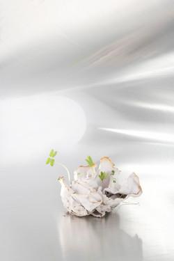 seedpaperH300.jpg