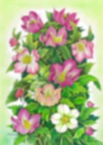 色鉛筆画 Atelier-syoko 九嶋祥子