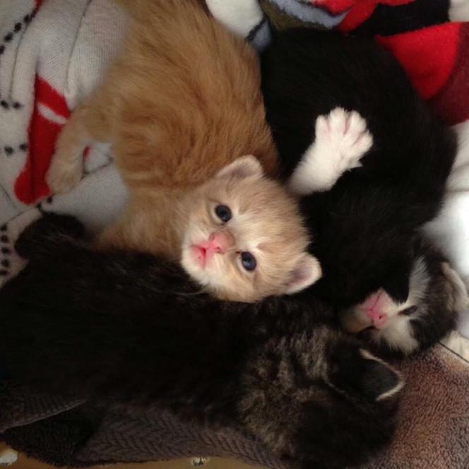 Kitten Baby Shower