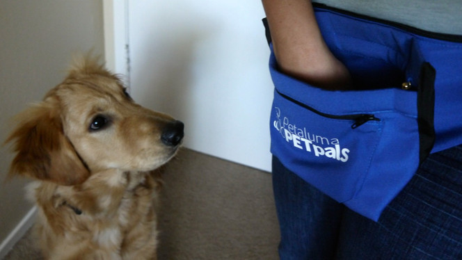 Pet Pals Dog Treat Pouch Promotion
