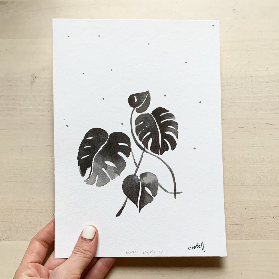 Winter Monstera