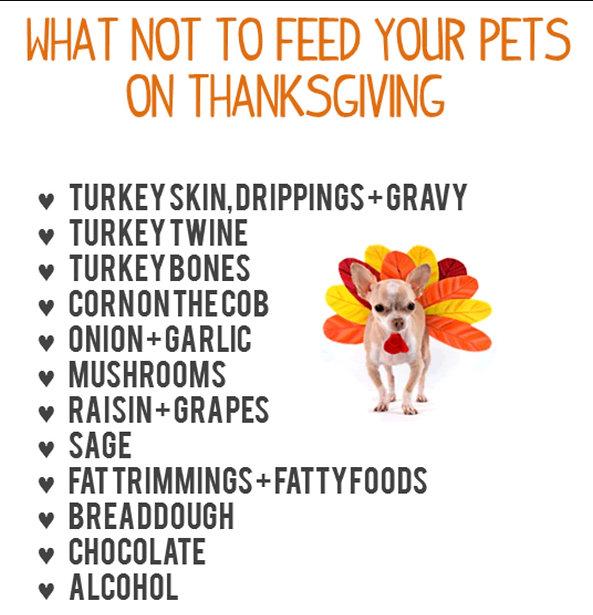 Thanksgivig Pet safety.jpg