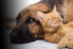 dog-cat-love.jpg