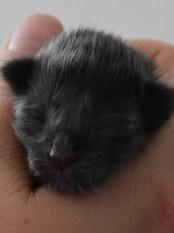 Born 18_02 - Newborn - Weight 95g