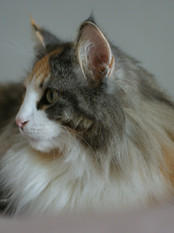 Alea in profile