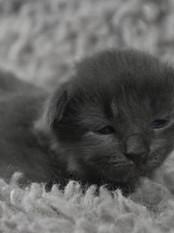 2 weeks old - 355g