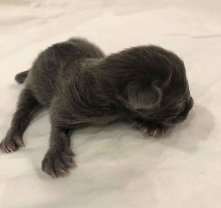 Newborn - 125g