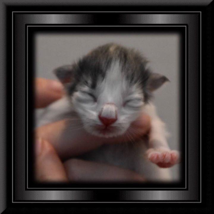 Phoebe - Newborn