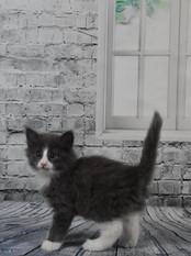 6 weeks old - 890g