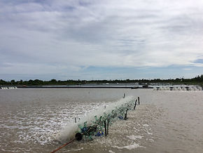 Shrimp supply chain a Global overview – Traceability