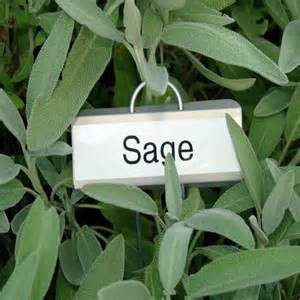 Sage - The Healing & Cleansing Herb