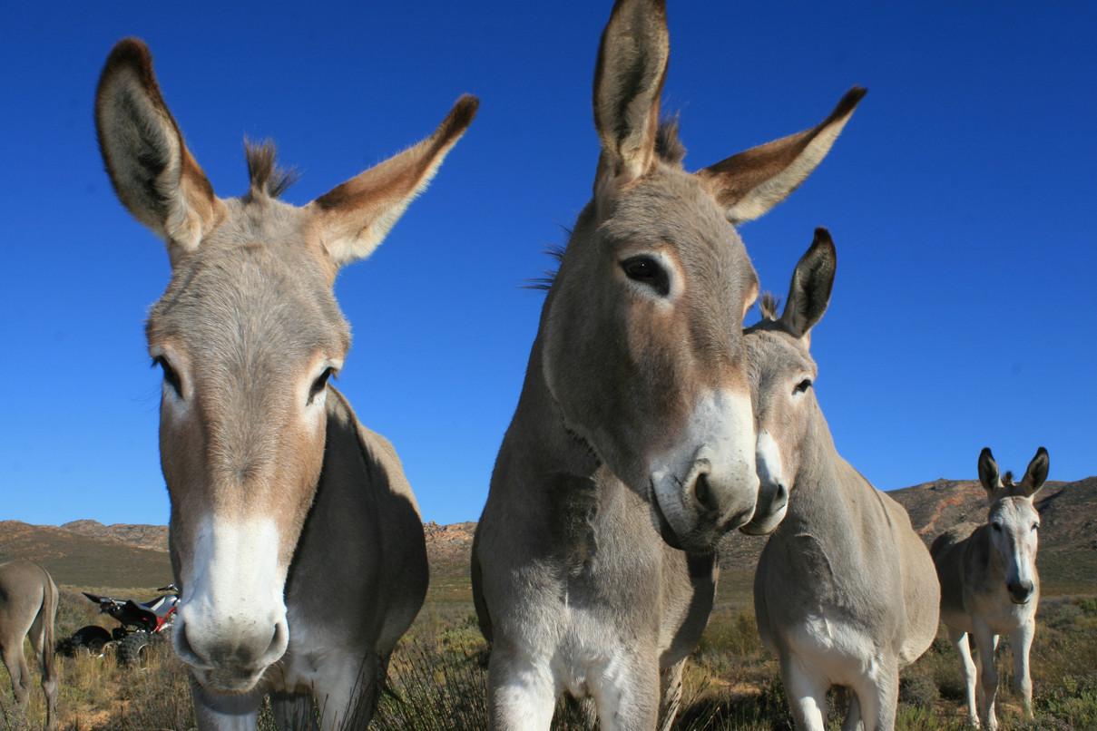 Donkey 2.jpg