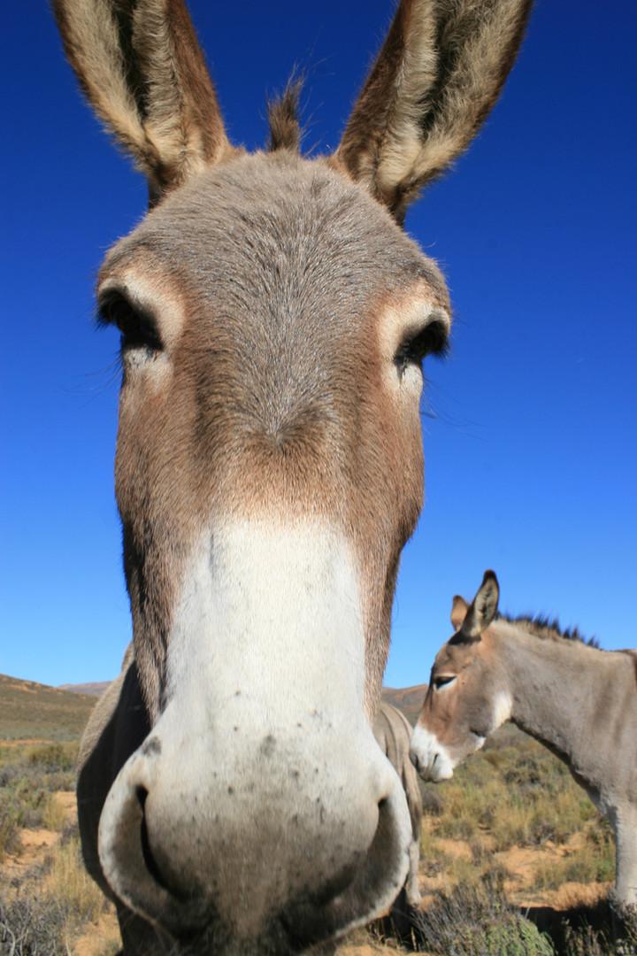Donkey 7.jpg