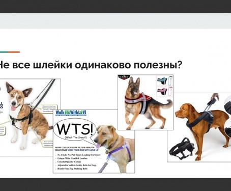 Выбор амуниции для собаки с точки зрения ветеринарного врача-реабилитолога — шлейки