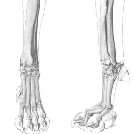 Травмы запястного и заплюсневого суставовТравмы запястного и заплюсневого суставов