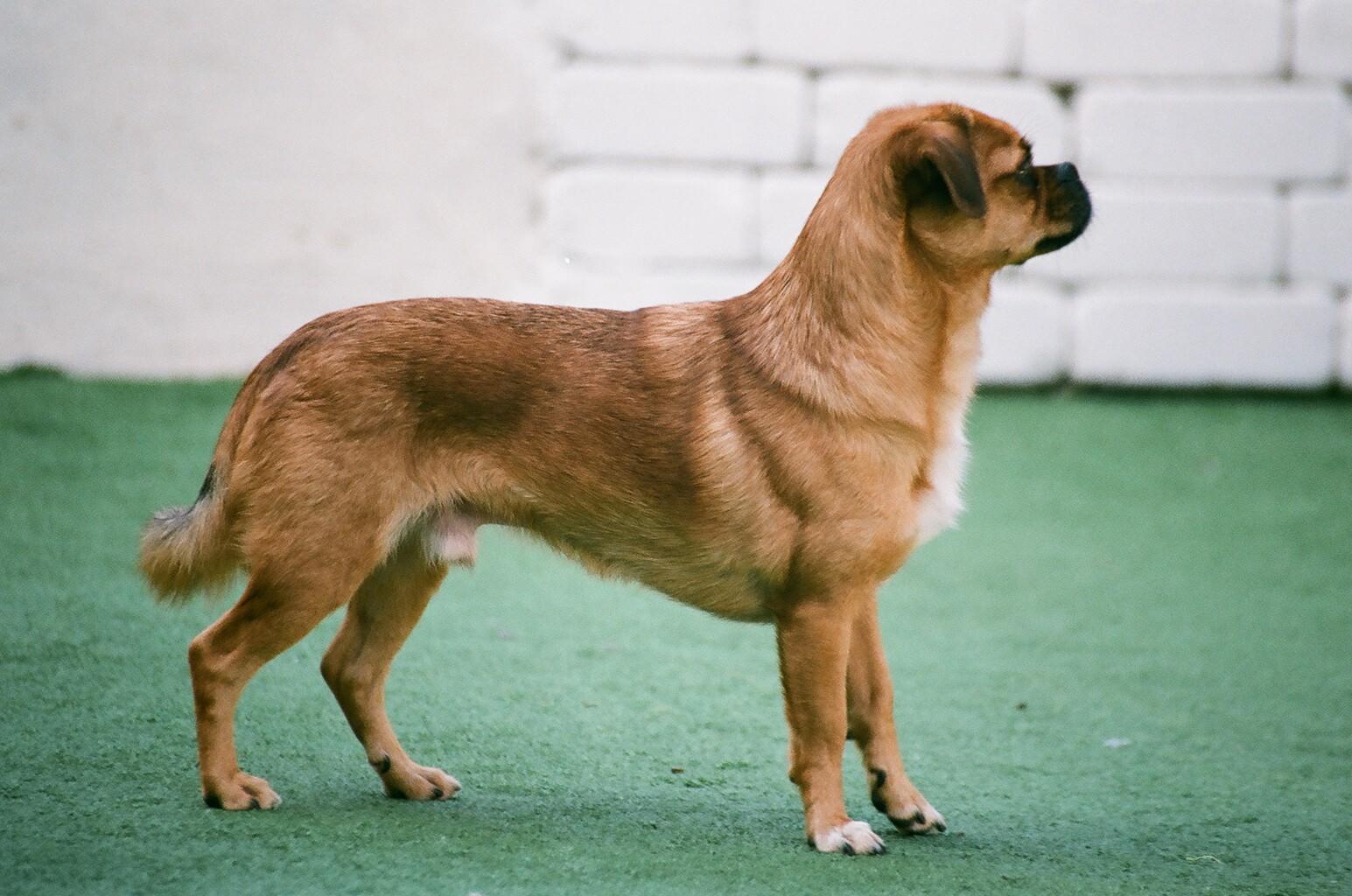Dog on Alert