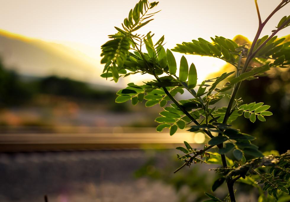Naturaleza (5).jpg
