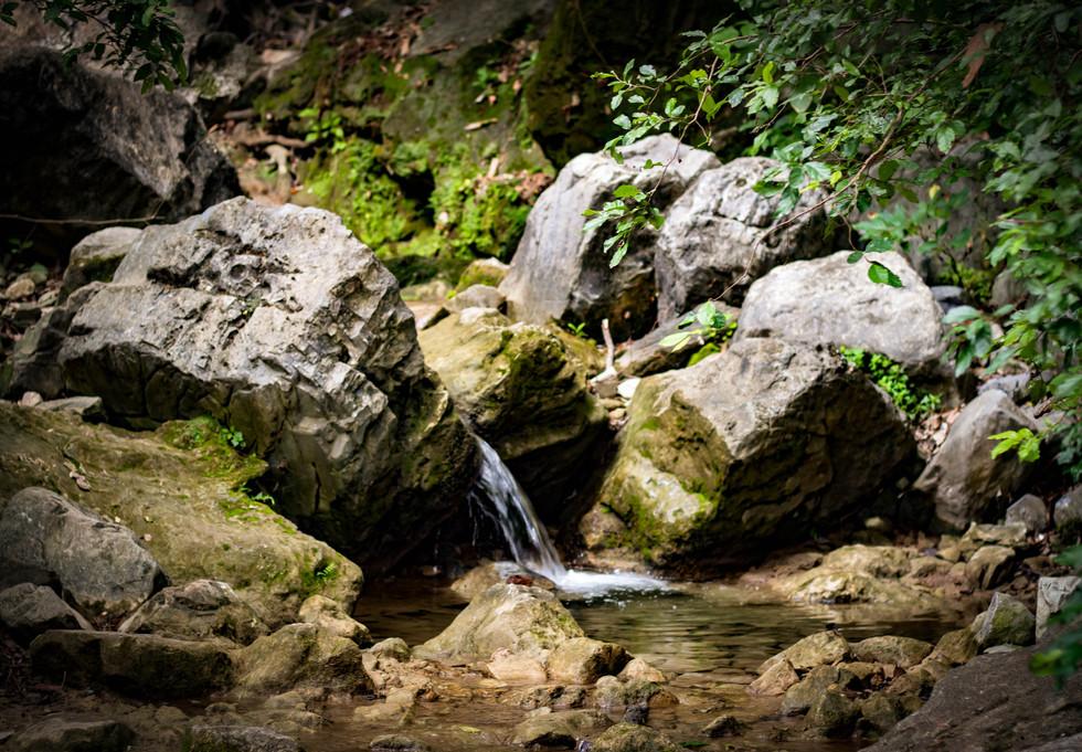 Naturaleza (7).jpg