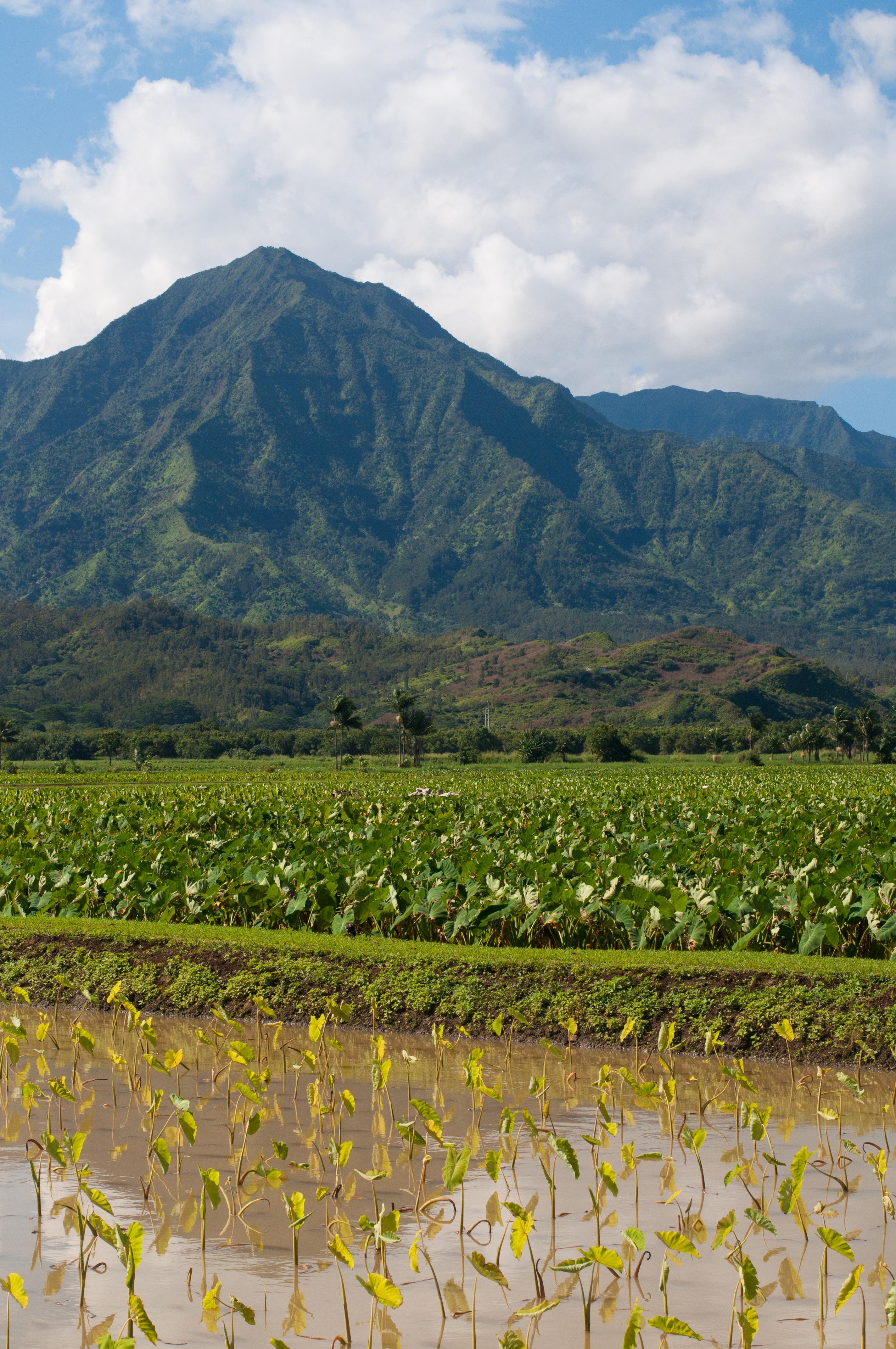 Hawaii Nov-30