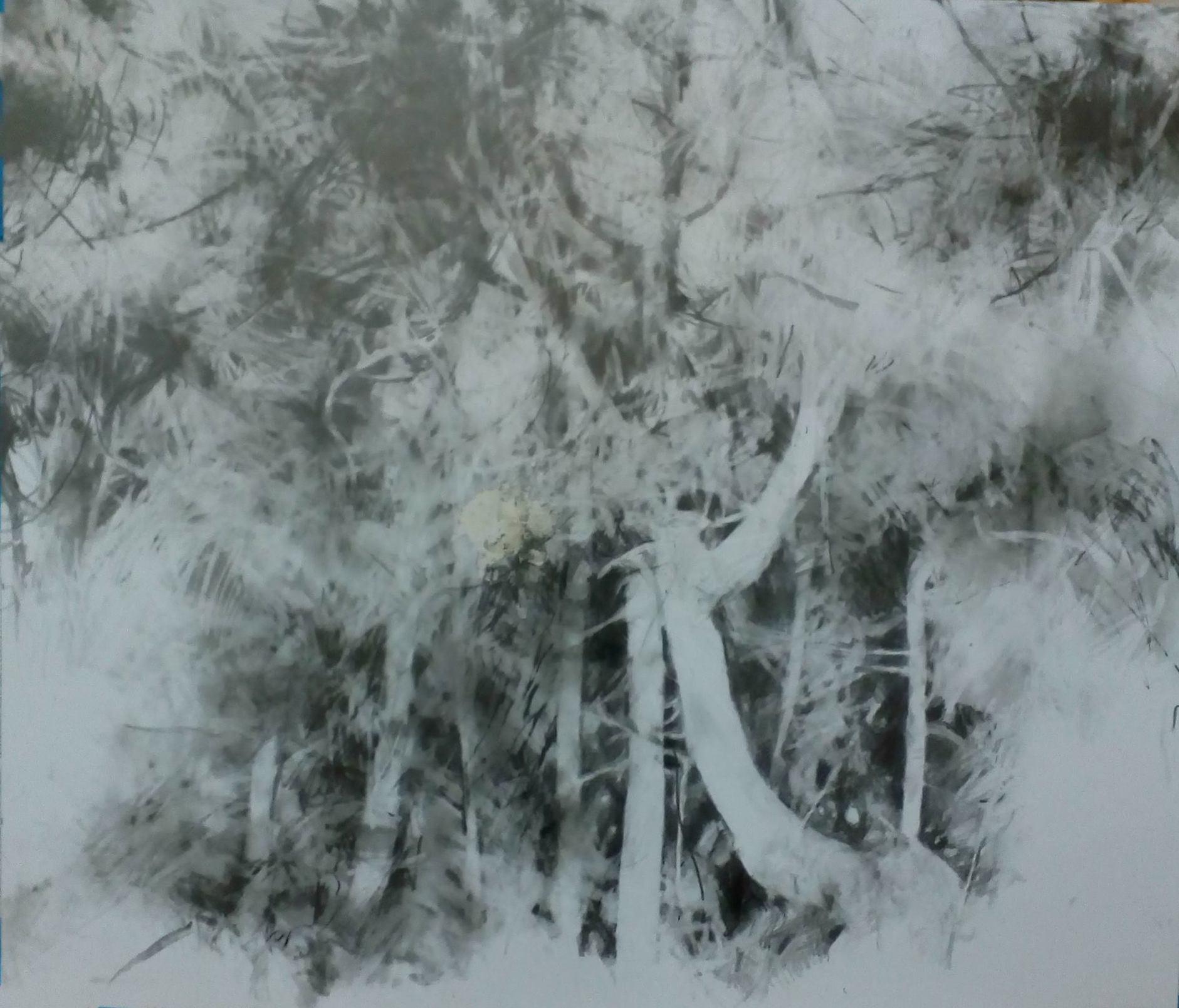 'Twisted, Dancing Pines, Malvern'