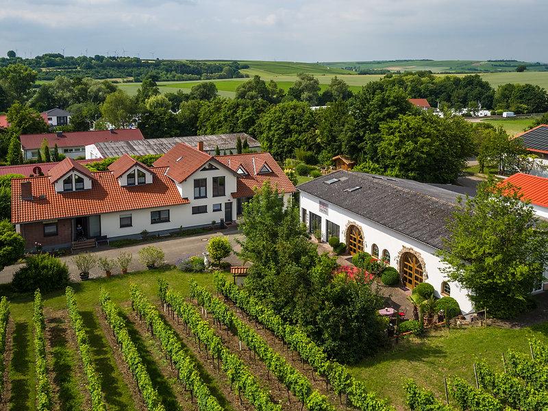 Diel Weingut Holthof-2018-011.jpg