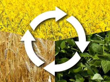 What is Crop Rotation?