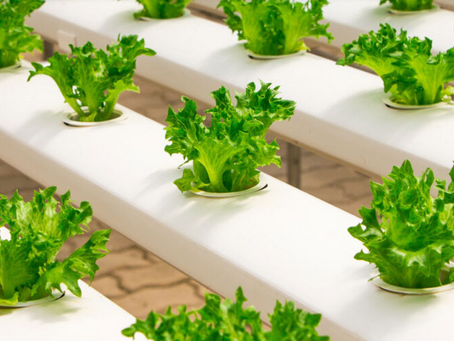 Help Me Understand the Benefits and Cost Savings of Hydroponics