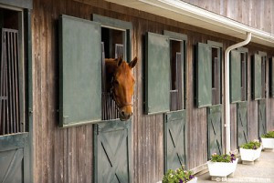 How Do I Care for a Stabled Horse?