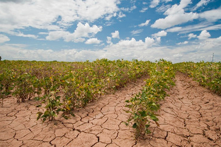 Farmer's Survival Guide to Survive and Thrive During a Drought