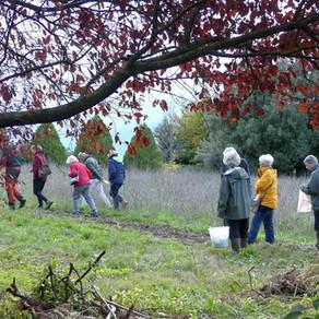 Sapori di Flora, 9 e 10 novembre 2019 - Escursioni con Edda Lattanzi alla scoperta delle erbe eduli