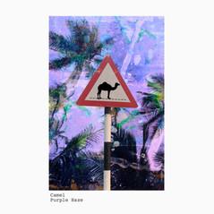 Camel +purple haze