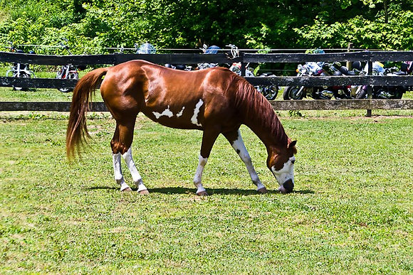 Sponsor a Horse for a Month