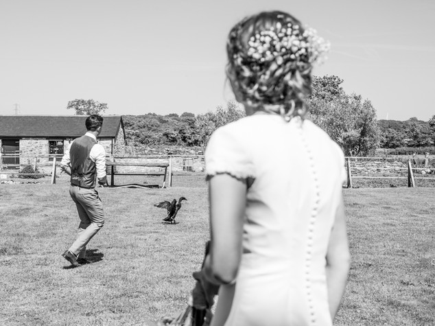 Groom Goose Chase in Summer
