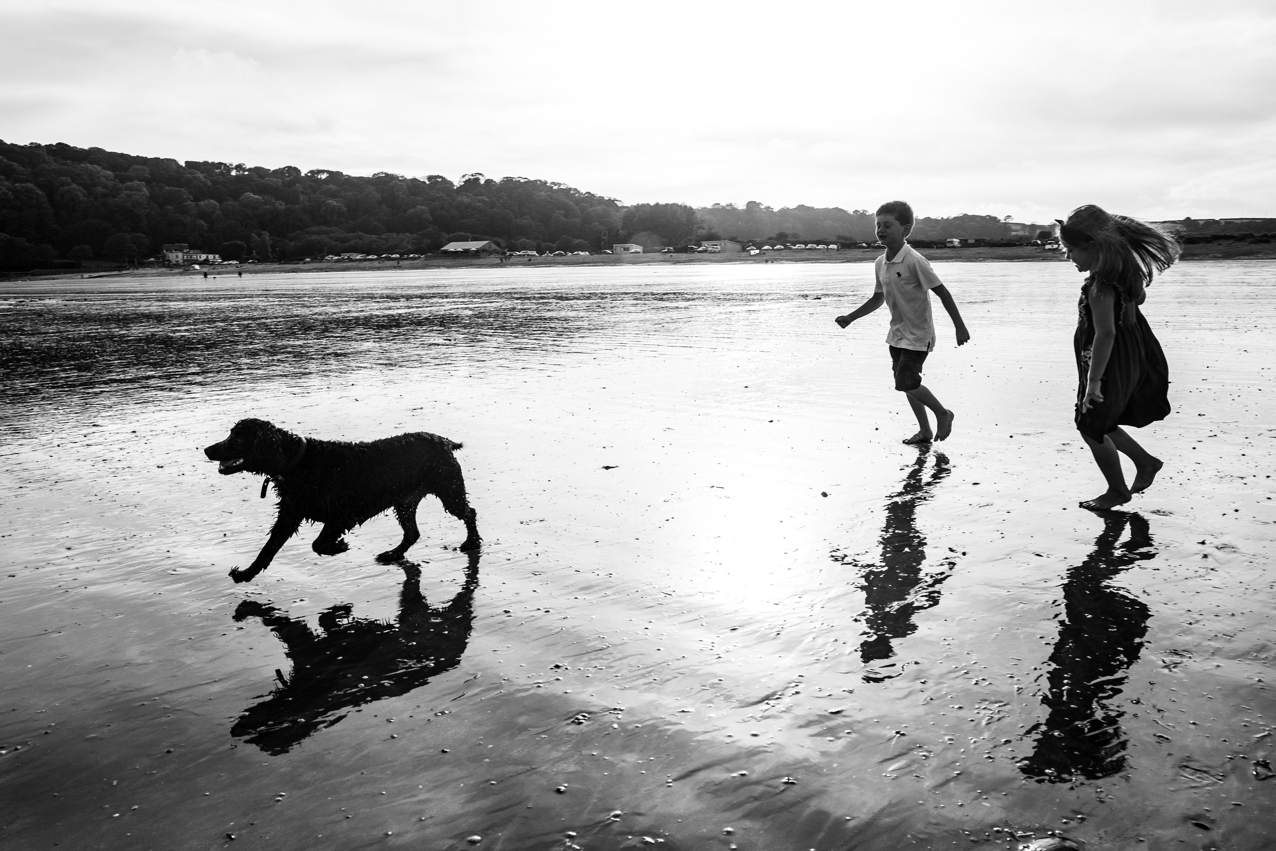 children chase their dog on the low tide beach at oxwich