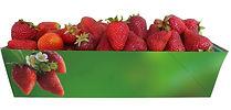 Strawberry Green 2_1.jpg