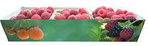 Berry Green 1.jpg