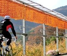 cycling01.jpg